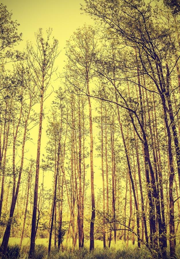 Fondo pacifico dell'annata della natura fotografie stock libere da diritti
