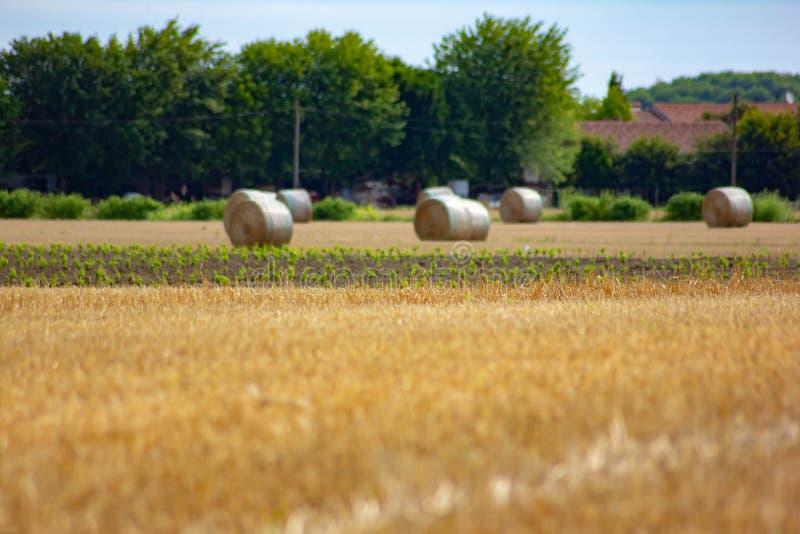 Fondo panorámico de un paisaje del campo con los campos del heno recogidos en balas fotografía de archivo