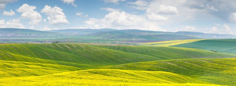 Fondo panorámico del fie floral de color verde amarillo hermoso del canola imagen de archivo libre de regalías