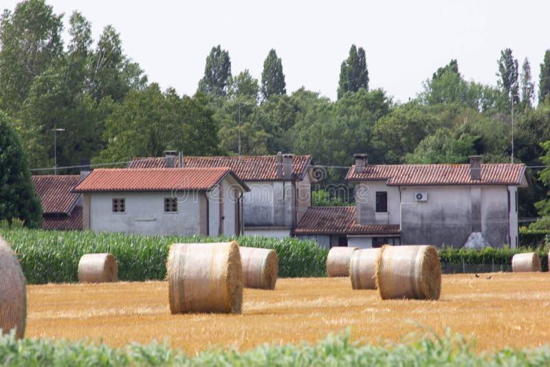 Fondo panorama della campagna, campo con fieno riunito in balle ed aziende agricole allegate immagine stock