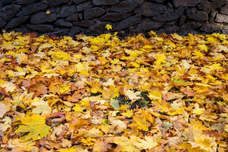 Fondo a partire dall'autunno immagini stock libere da diritti