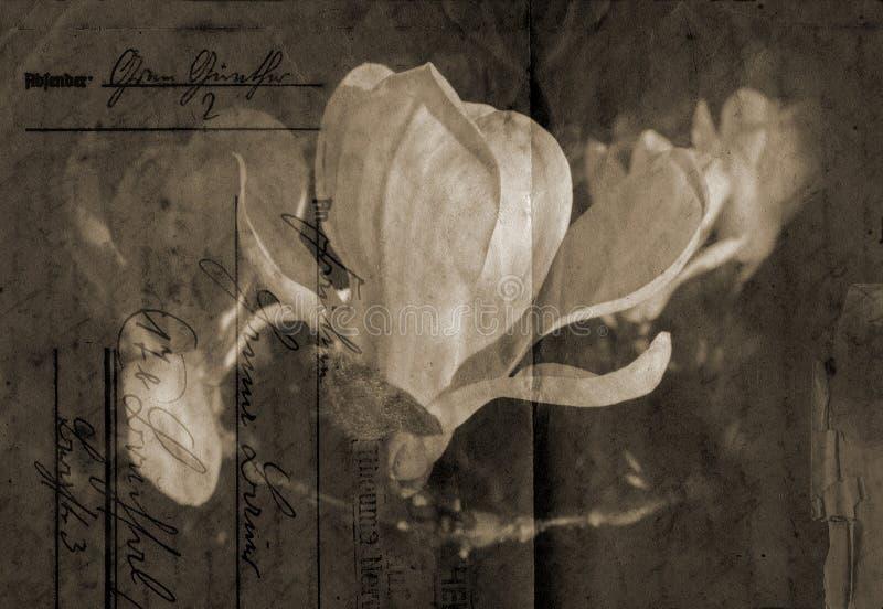 Fondo pasado de moda de la magnolia stock de ilustración