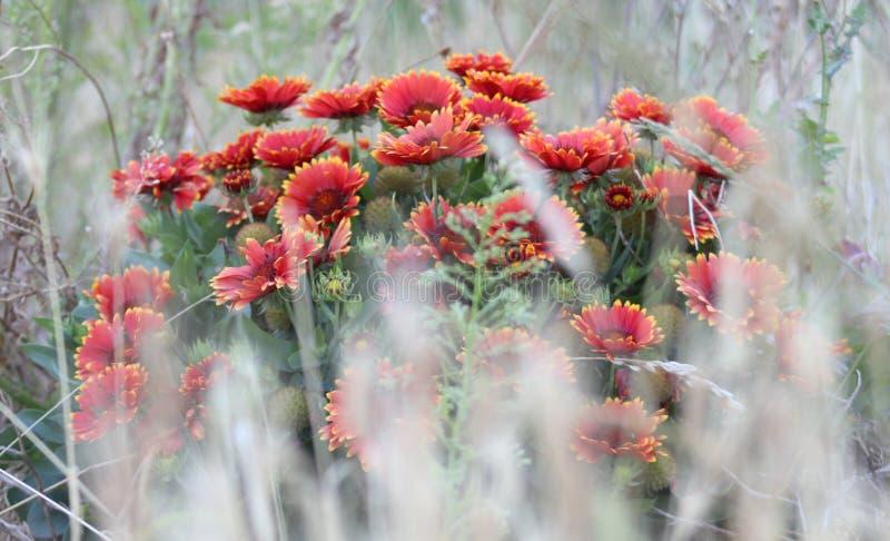 Fondo per testo con i fiori rossi fotografia stock