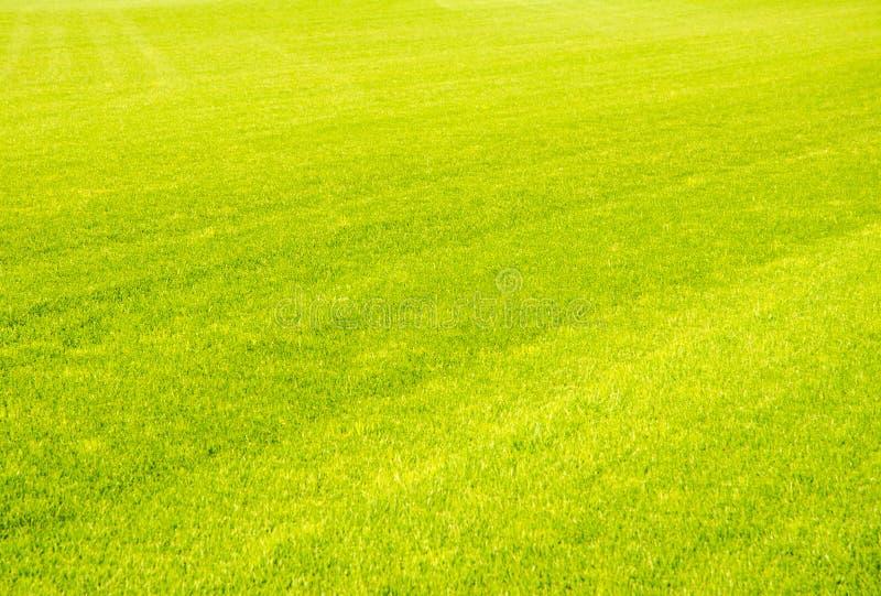 Fondo perfecto de la hierba verde del corte corto imagen de archivo libre de regalías
