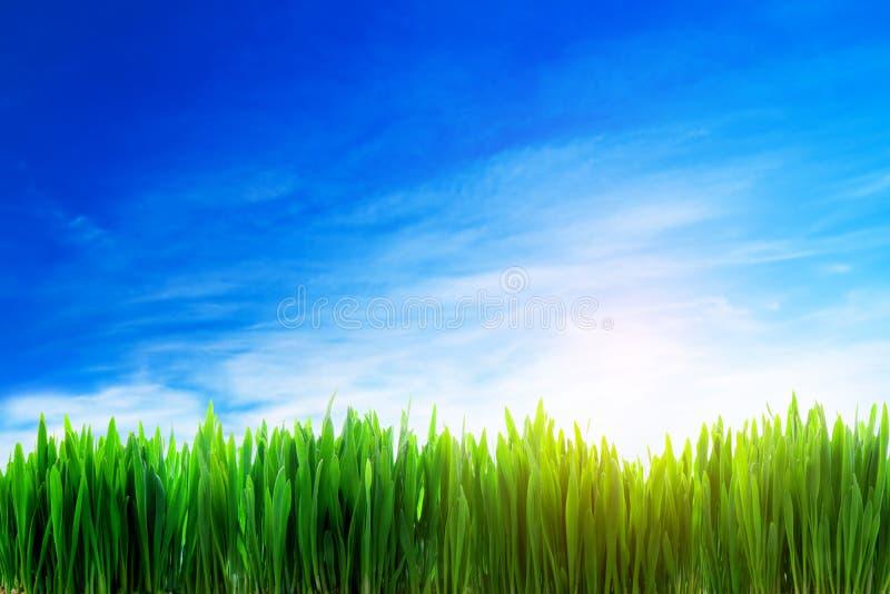 Fondo perfecto de la naturaleza del campo de hierba foto de archivo libre de regalías