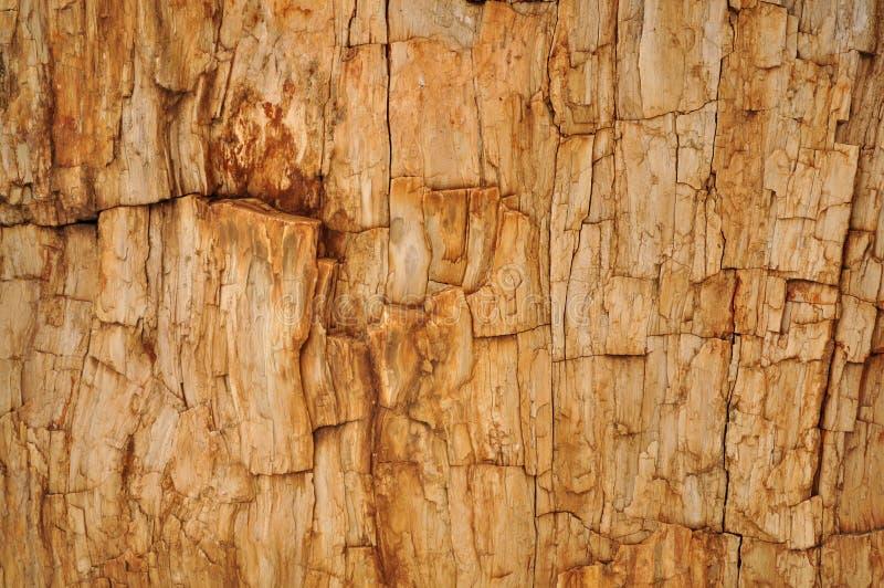 Fondo petrificato dell'albero della sequoia fotografie stock libere da diritti