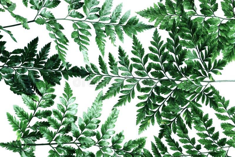 Fondo plano de las hojas de palma de la opinión superior de la endecha imagenes de archivo