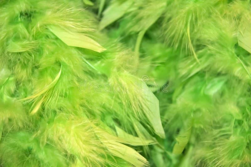 Fondo plumoso mullido verde borroso con más falta de definición en un lado - sitio para la copia imágenes de archivo libres de regalías