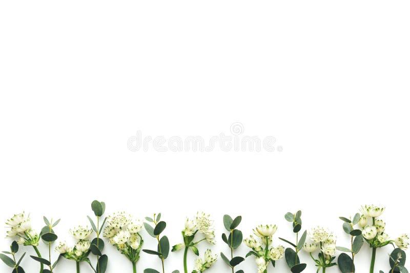 Fondo primaveral con hojas verdes y flores blancas de fondo blanco fotos de archivo libres de regalías