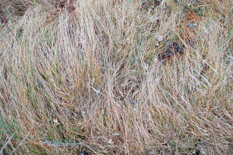 Fondo puesto plano de la hierba gris vieja en un prado del otoño, textura estacional del concepto imagenes de archivo