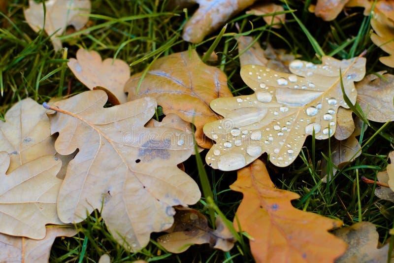 Fondo putrefacto de las hojas del otoño fotografía de archivo