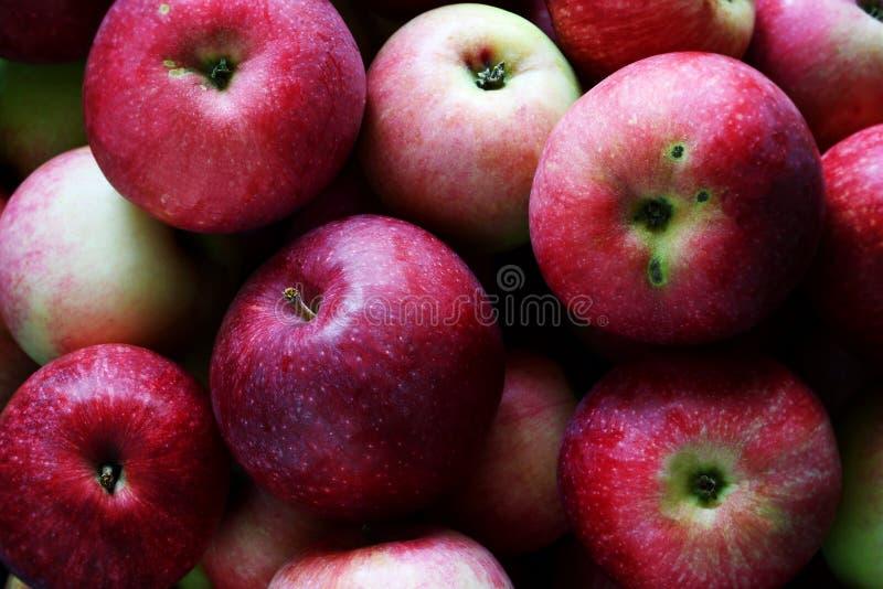 Fondo rojo de las manzanas Fondo de manzanas rojas frescas orgánicas Cosecha de la granja fotos de archivo libres de regalías