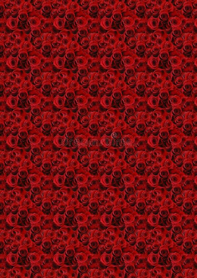 Fondo rojo de las rosas. foto de archivo