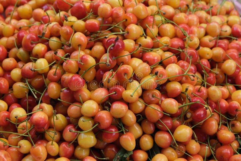 Fondo rojo de los tomates Grupo de cosecha del tomatoesThe de cerezas dulces en el jardín Huertas de cereza dulce, cosechando fotografía de archivo