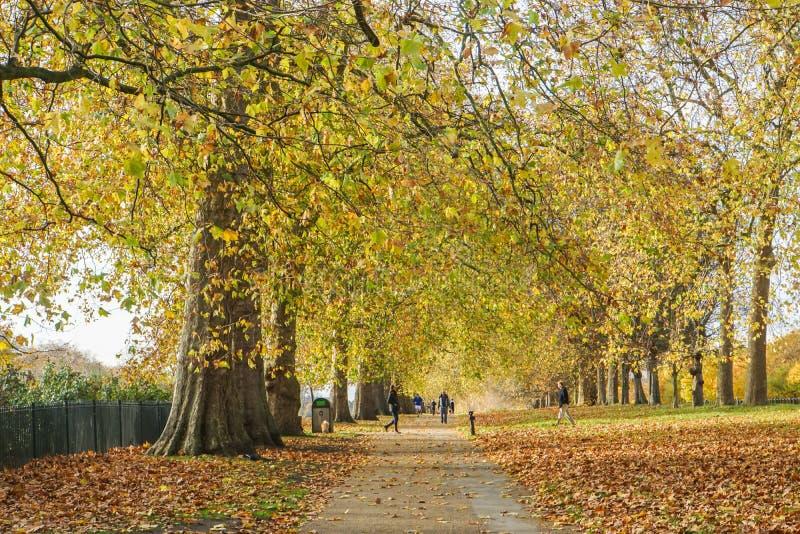Fondo romantico - le foglie e gli alberi caduti in parco fotografie stock
