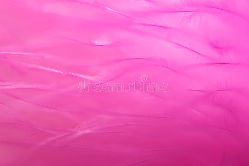 Fondo rosa con le piume Sfuocature ottimistiche Macro piume fotografie stock libere da diritti
