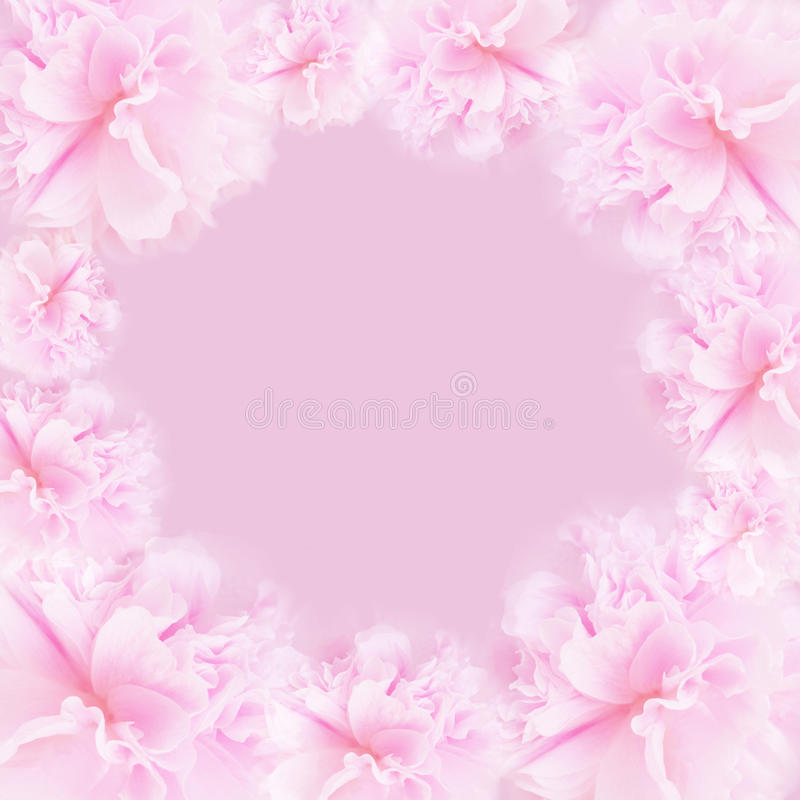 Fondo rosado fotografía de archivo