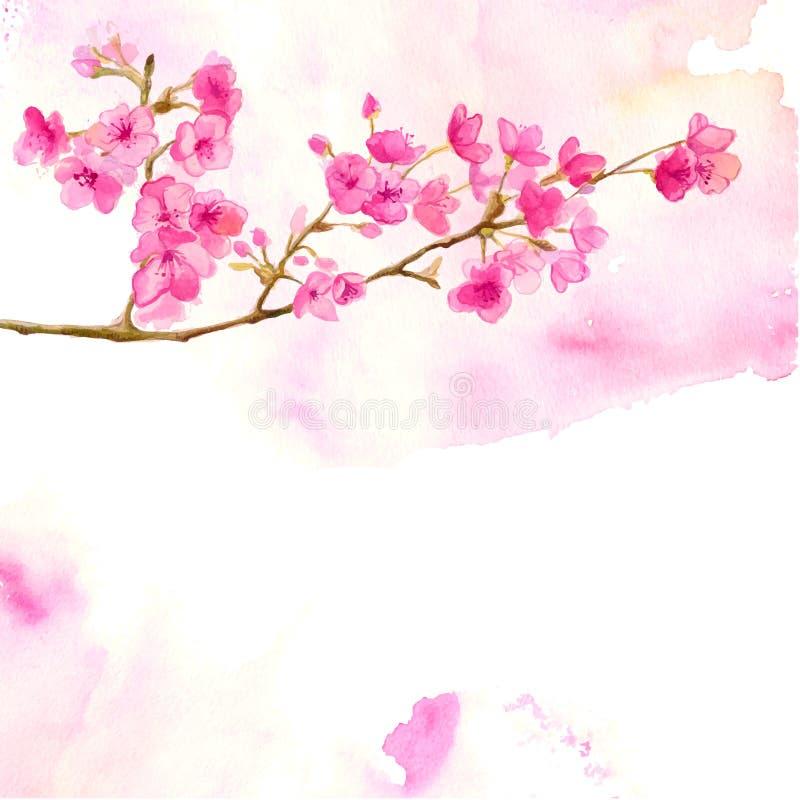 Fondo rosado con la rama de la acuarela de la cereza stock de ilustración