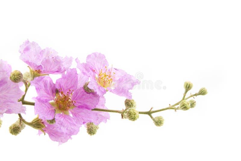 Fondo rosado de la flor imágenes de archivo libres de regalías