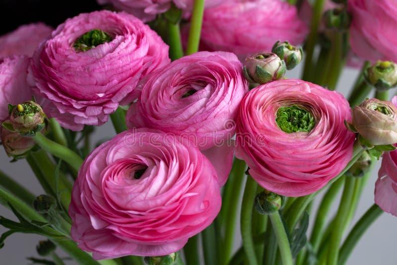 Fondo rosado del ramo del ran?nculo Macro Primer Para la entrega colorida de la tarjeta o de la flor de felicitación Foco selecti imagen de archivo libre de regalías