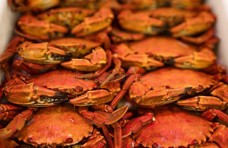 Fondo rosso dei granchi che si trova nel deposito dei frutti di mare Immagine naturale sana di concetto dei pasti fotografie stock