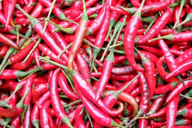 Fondo rosso dei peperoncini rossi fotografie stock libere da diritti