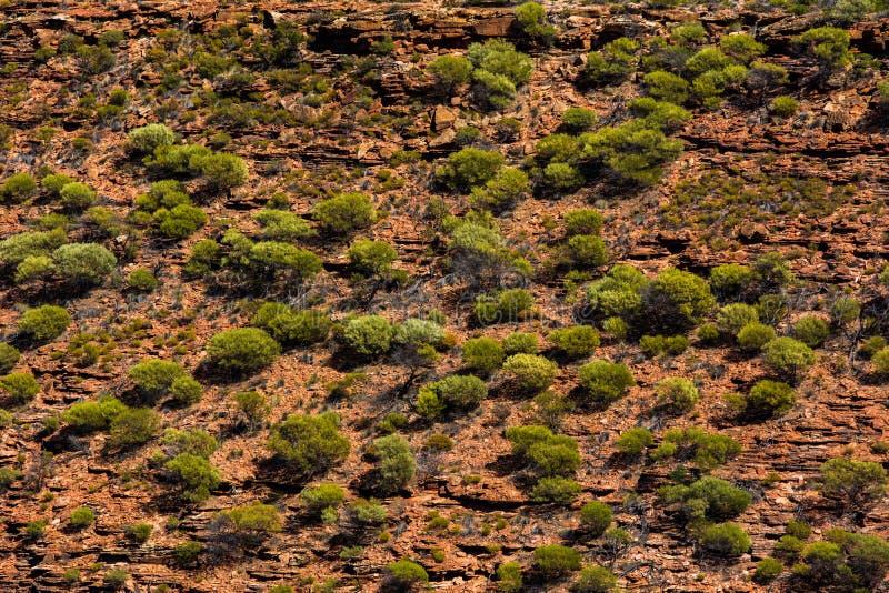 Fondo rural llano remoto australiano de la tierra foto de archivo