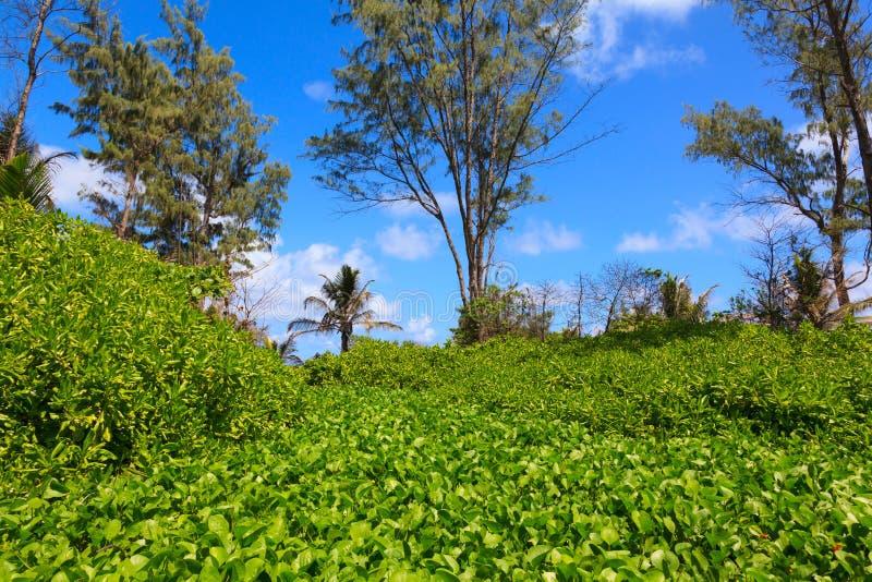 Fondo scenico della foresta della giungla. fotografia stock libera da diritti