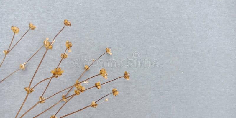 Fondo secado de la flor foto de archivo libre de regalías