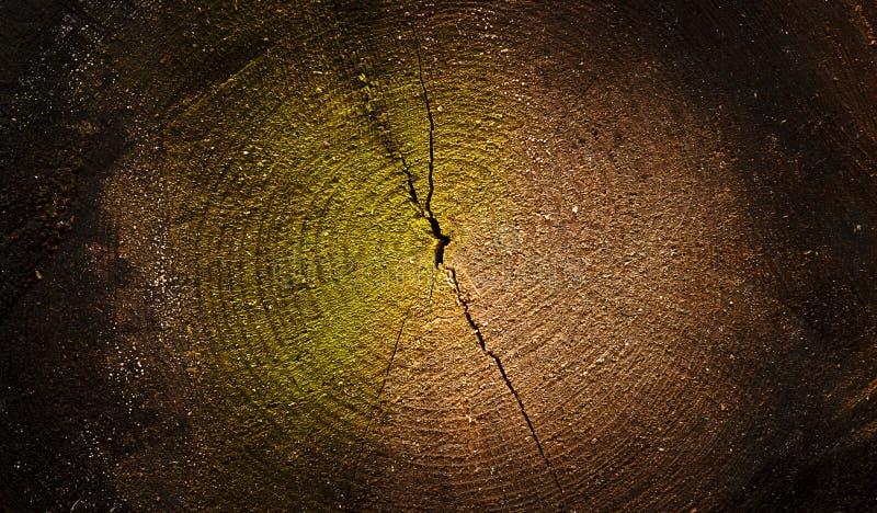Fondo seccionado transversalmente de madera texturizado oscuridad fotografía de archivo libre de regalías