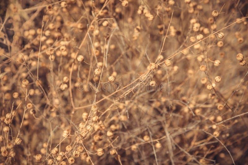 Fondo seco de la flora fotografía de archivo