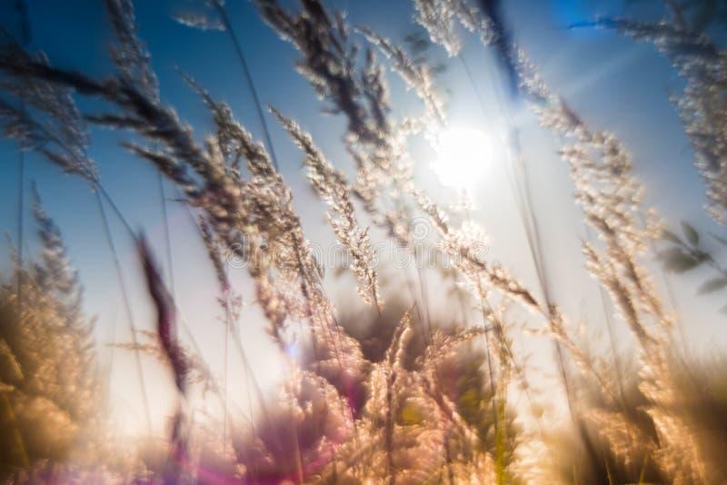 Fondo seco de la hierba del verano fotografía de archivo libre de regalías