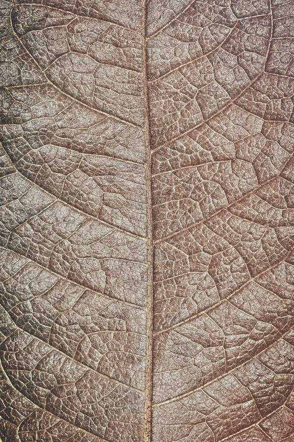 Fondo seco de la textura de la hoja fotos de archivo
