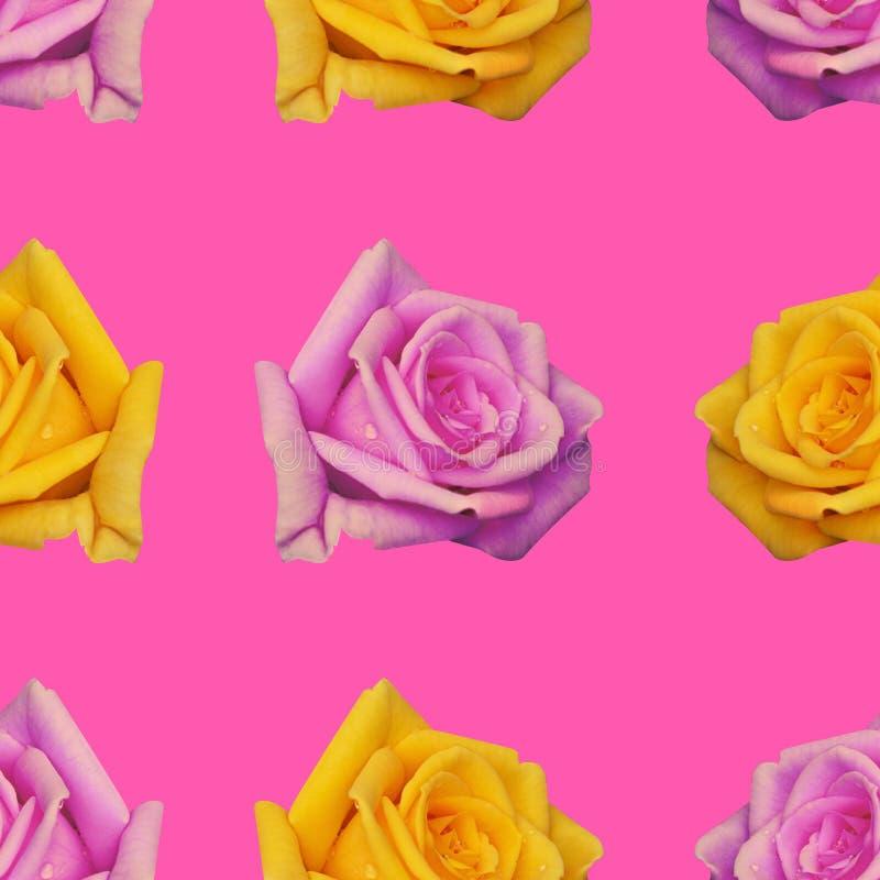 Fondo senza cuciture con la ripetizione dei germogli di colore rosa di rose e giallo fotografia stock