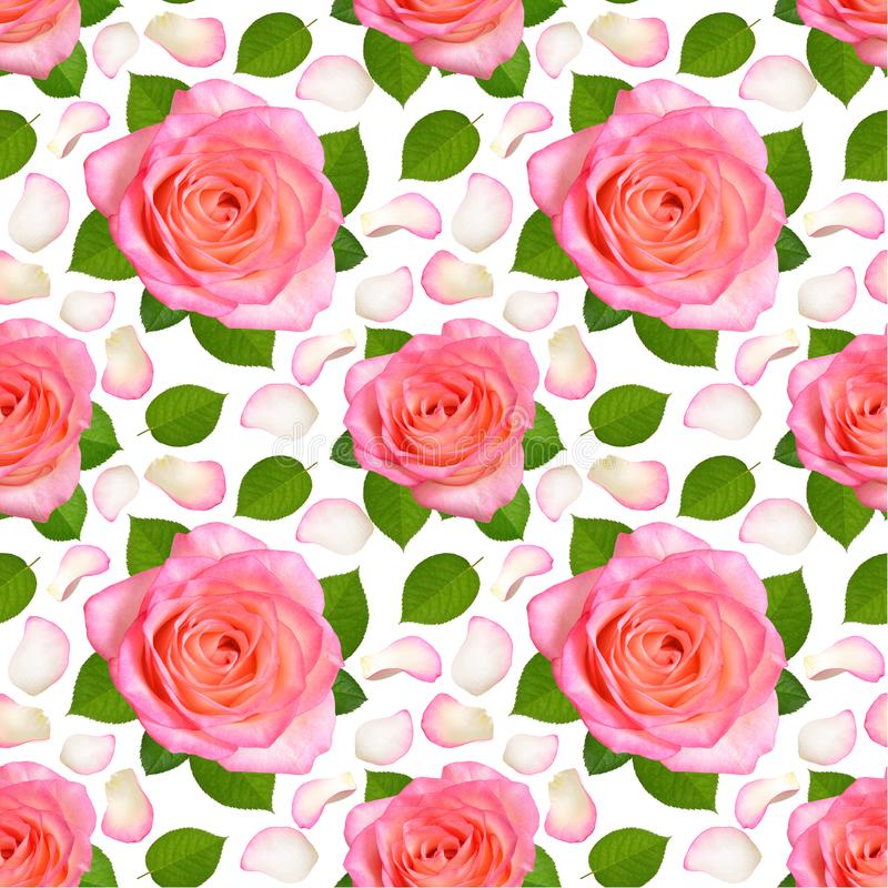 Fondo senza cuciture con le rose ed i petali rosa royalty illustrazione gratis
