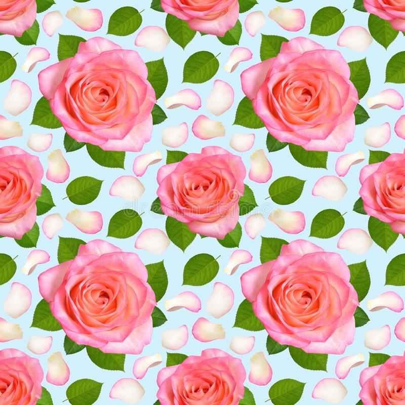 Fondo senza cuciture con le rose ed i petali rosa immagini stock