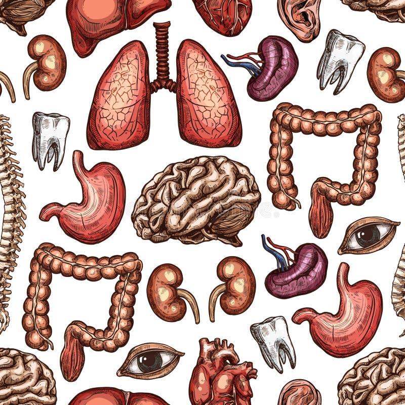 Fondo senza cuciture del modello di anatomia dell'organo umano illustrazione vettoriale