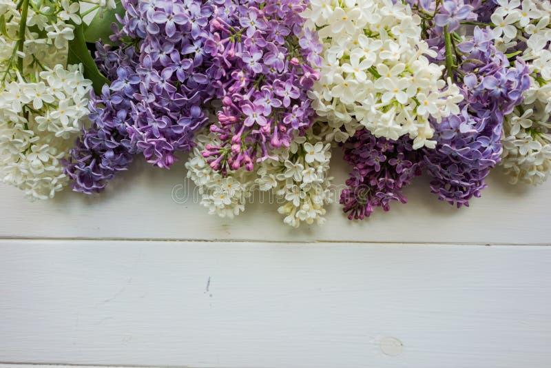 Fondo, struttura con i rami del lillà nei colori differenti - bianco, del lillà e della porpora illustrazione vettoriale