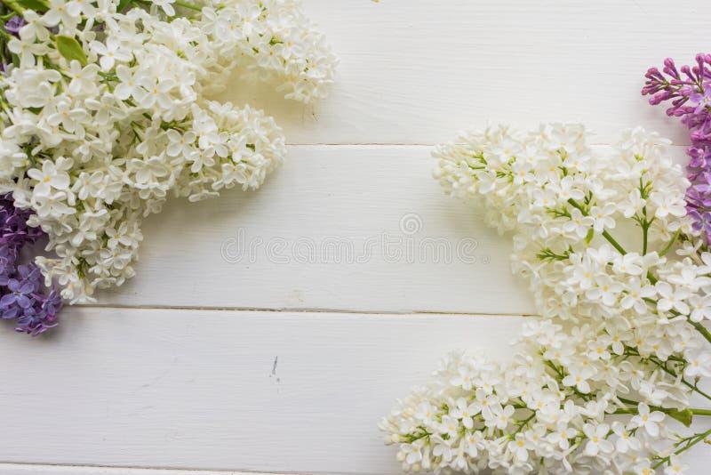 Fondo, struttura con i rami del lillà nei colori differenti - bianco, del lillà e della porpora royalty illustrazione gratis