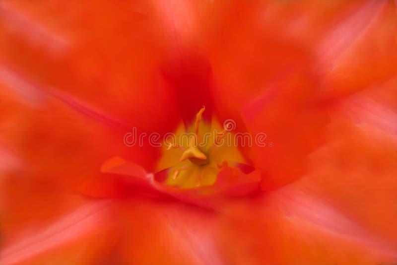 Fondo, struttura di un fiore rosso e aperto immagine stock