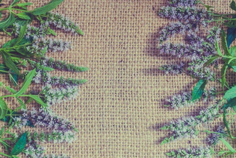 Fondo strutturale d'annata di estate Vecchi tela da imballaggio e fiori e foglie di menta immagine stock