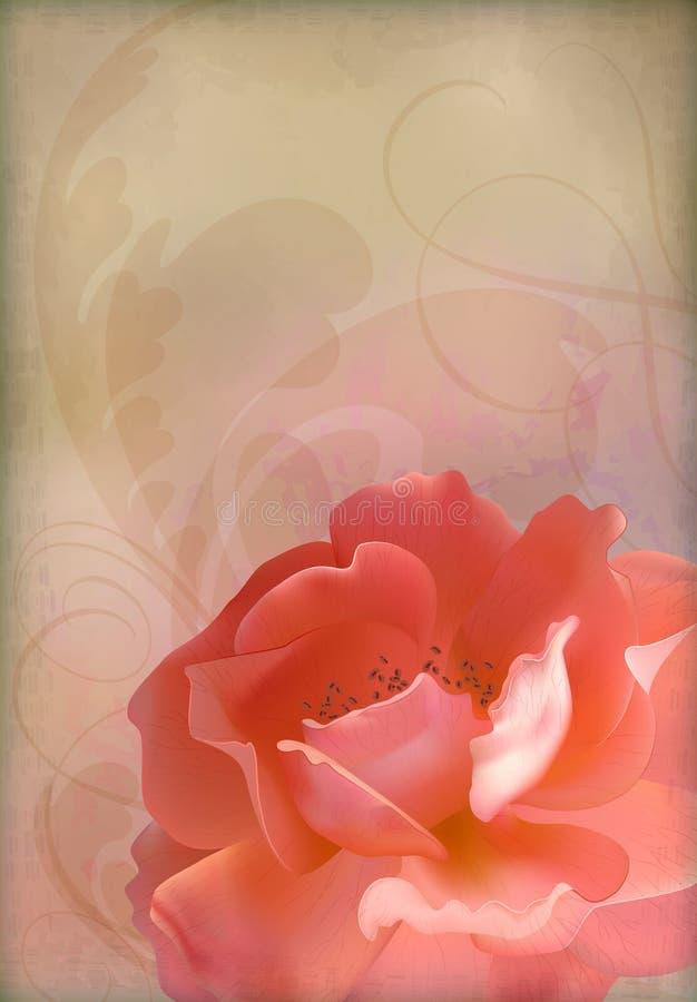 Fondo strutturato della vecchia carta dell'annata di vettore di Rosa royalty illustrazione gratis