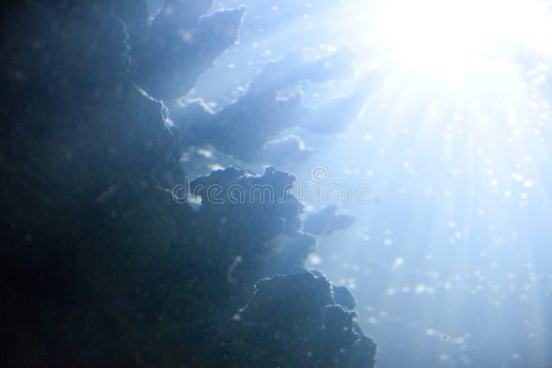 Fondo subacqueo astratto con i coralli ed alga alla luce solare luminosa attraverso l'acqua immagine stock libera da diritti