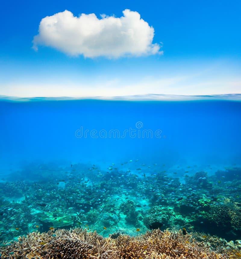 Fondo subacqueo della barriera corallina dell'oceano fotografie stock libere da diritti
