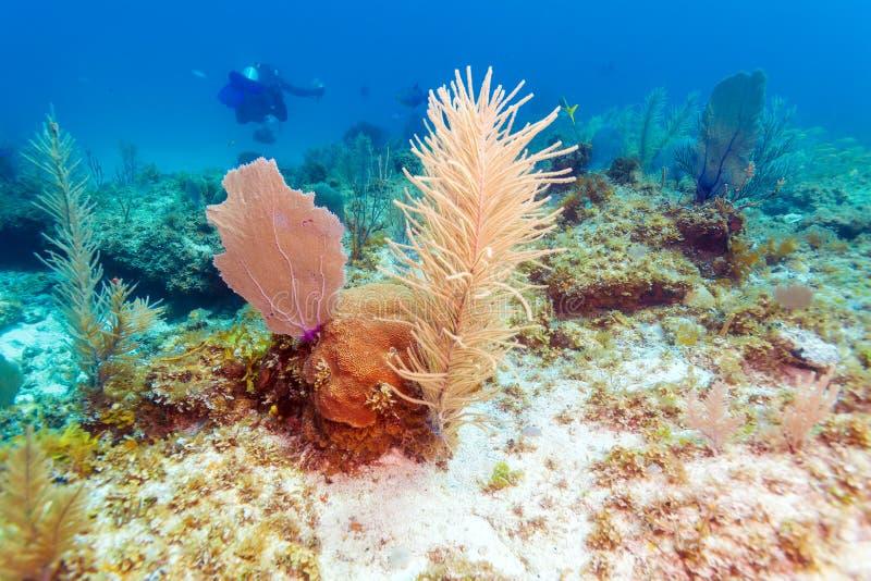 Fondo subacuático con los corales suaves y duros, Cayo largo imágenes de archivo libres de regalías