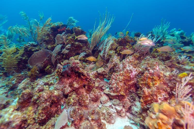 Fondo subacuático con los corales suaves y duros, Cayo largo imagen de archivo