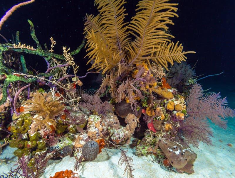 Fondo subacuático de la noche con los corales suaves y duros, Cayo Larg imágenes de archivo libres de regalías