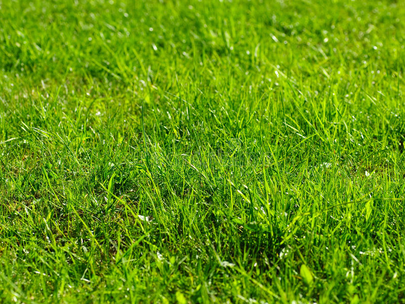 Fondo Sunlit de la hierba fotografía de archivo libre de regalías