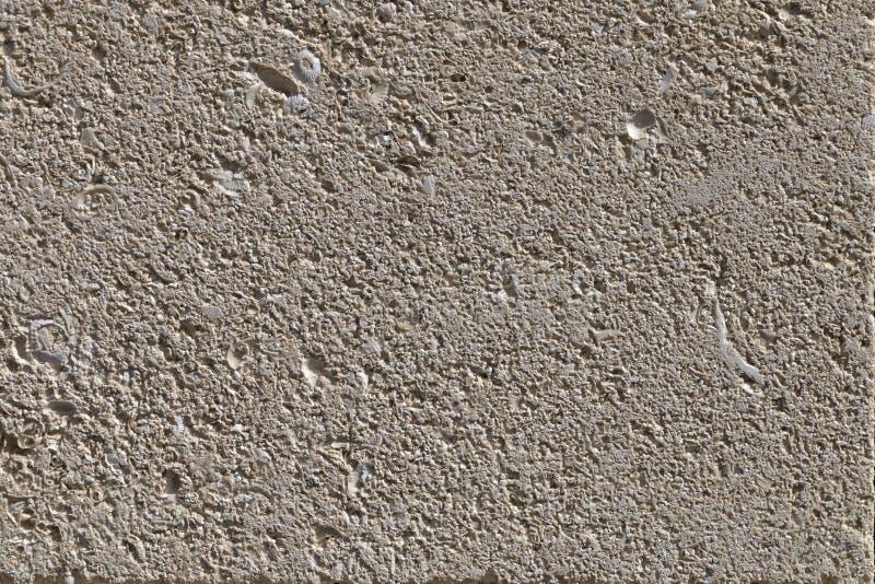 Fondo, textura de la piedra caliza gris, roca de la cáscara imagen de archivo libre de regalías