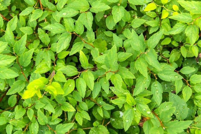 Fondo texturizado hojas jugosas verdes claras foto de archivo